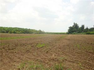 17529 SW 244 St 1.5 Acres. Homestead, Florida - Hometaurus