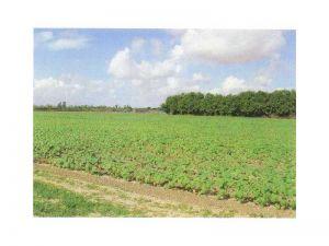 18900 SW 329 St. Homestead, Florida - Hometaurus